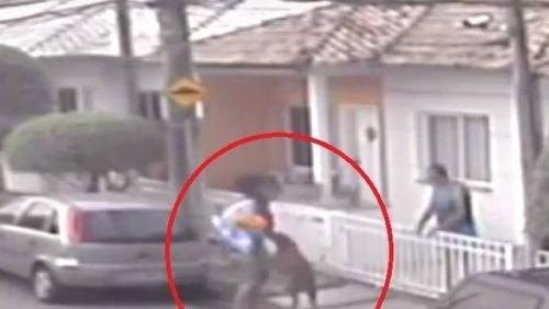 RJ: Pitbull ataca homem com criança de colo e dono ironiza situação