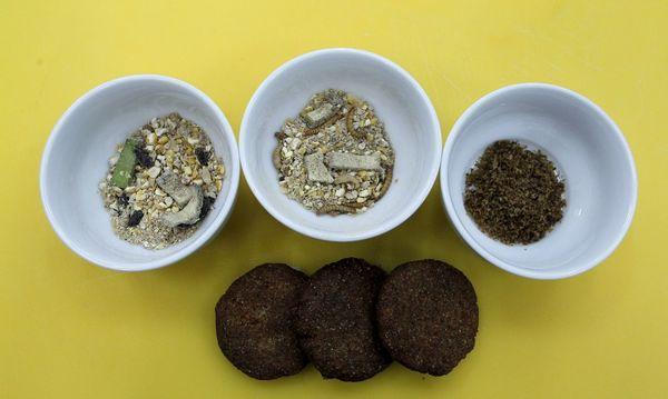 União Europeia aprova primeiro produto derivado de insetos para consumo humano