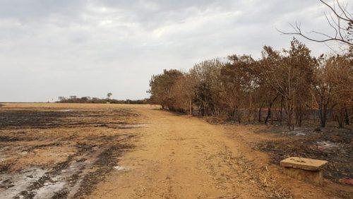 Ruralista é multado em R$ 293,4 mil por danificar vegetação nativa em Pontal