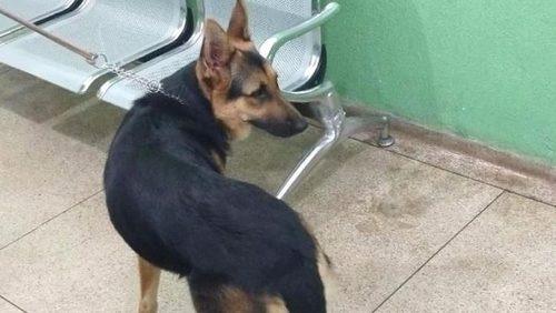 Homem é preso por maus-tratos contra cadela em Ribeirão Preto