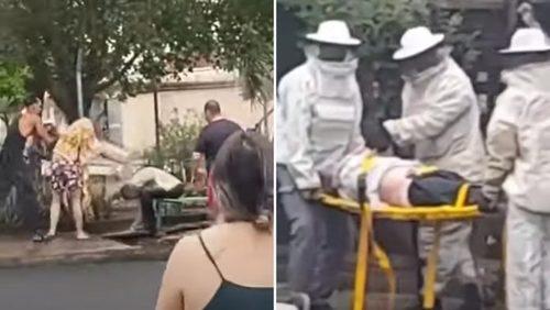 Morre idoso atacado por abelhas em ponto de ônibus de Ribeirão Preto