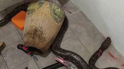 Mulher luta com cobra no banheiro e história viraliza nas redes sociais
