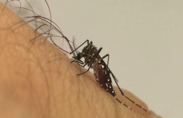 RP já soma 1.650 casos de dengue