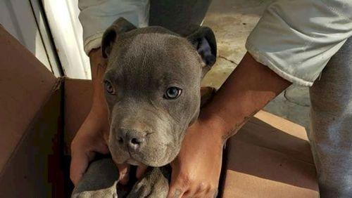 Criança abandona cachorro em abrigo para protegê-lo do pai; entenda