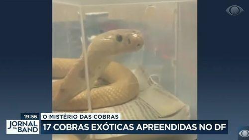 Polícia apreende 16 cobras no DF e suspeita de jovem picado por naja