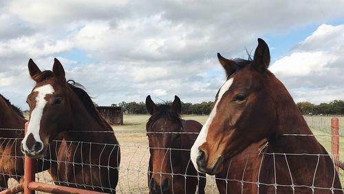 Soro obtido do sangue de cavalos pode ter anticorpos neutralizantes contra o coronavírus